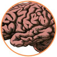 human_brain