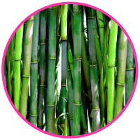 bamboo_plants_facts