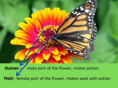 pollination_process