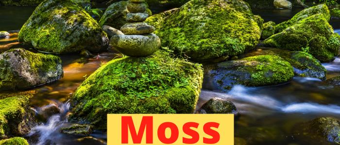 moss_plants