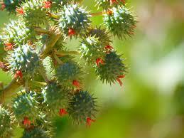 poisonous_plants