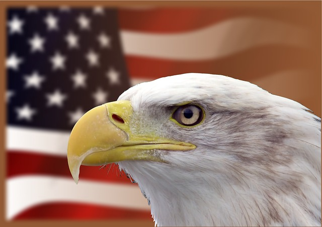 bald_eagle_facts_for_kids