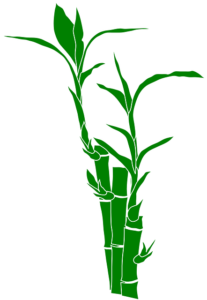bamboo_plant
