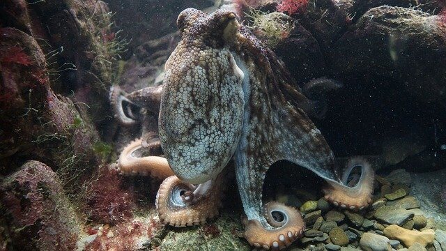 octopus_facts_for_kids
