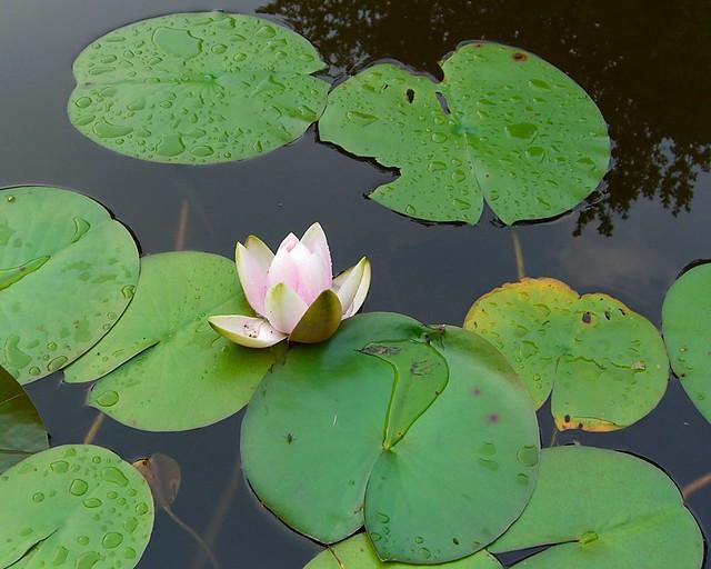 aquatic_plants_facts