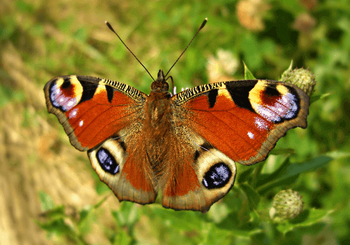 life_cycle_of_a_butterfly