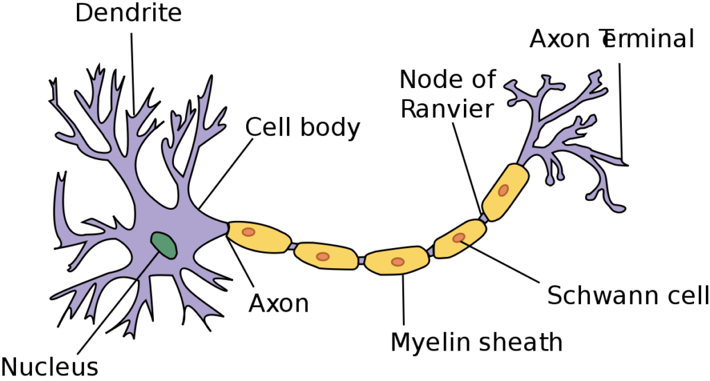 the_nervous_system