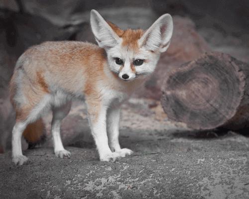 Animal_Adaptations