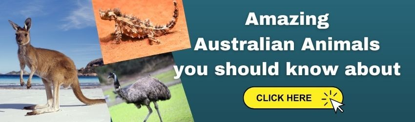 Australasia and Oceania Facts