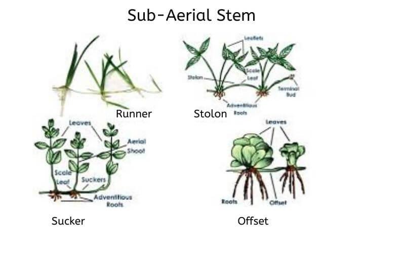 plant_stem