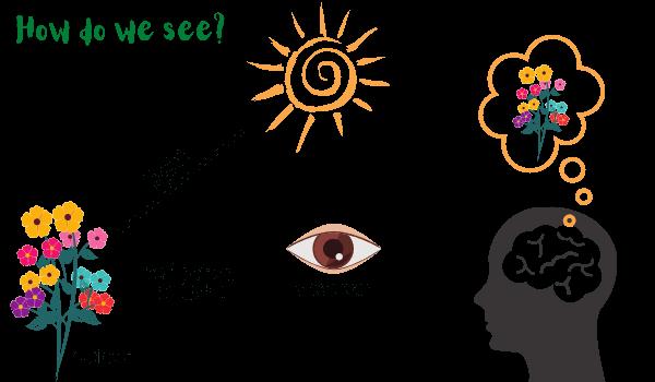 reflection_of_light