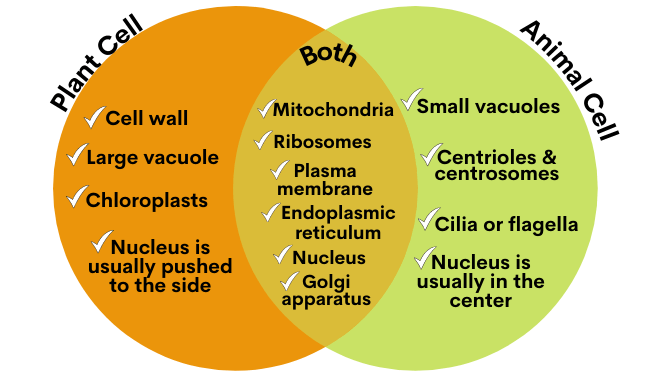 animal_cell_diagram
